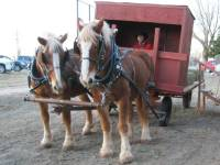 Horses and front of wagon